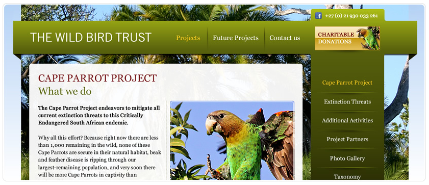 This web design from Lilo uses green to show its environmental association